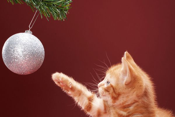 A small tabby cat kitten with a holiday ornament.