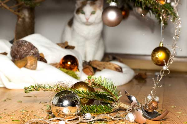 Tinsel and ribbons are very dangerous if cats eat them.