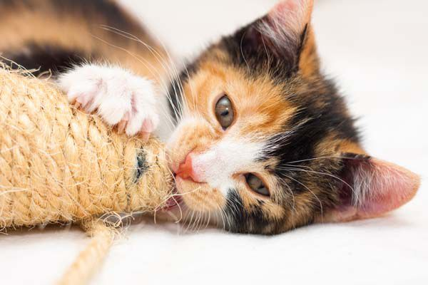 Give your cat an appropriate toy to play with