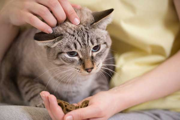 If your cat won't eat her favorite treats, she may have toothache.