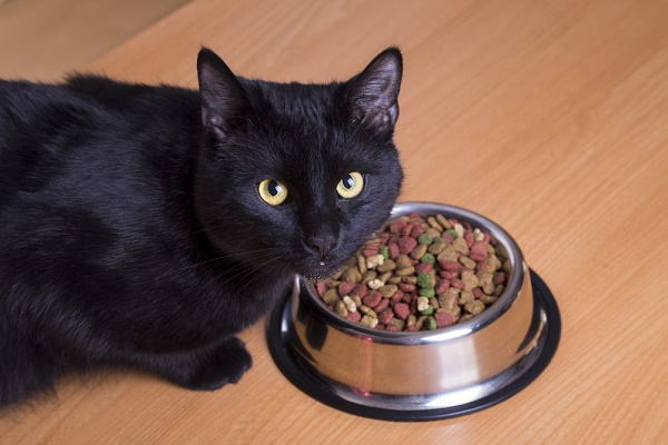 Black cat staring out from bowl filled with dry food.