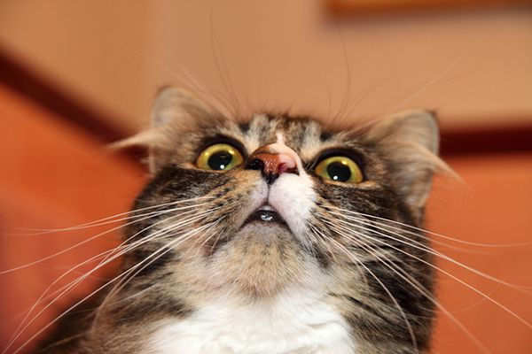 A shocked and surprised cat.
