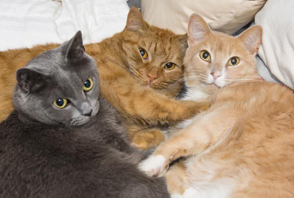 Kitties who live together develop a group scent