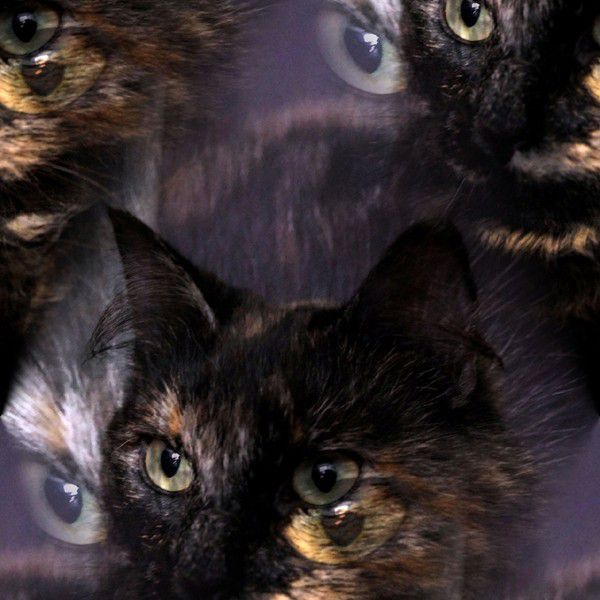 Can science help explain mysticism where cats and ghosts are concerned? (Photo via Public Domain Pictures)