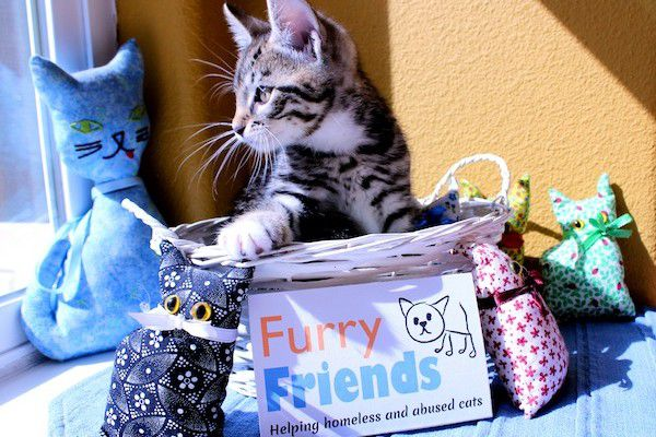Benny the kitten is lucky to be at Furry Friends.