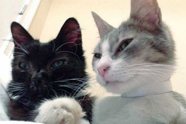 Whiskers and Kathy were friends, so they were fostered together. (Photo courtesy Jennifer Austin.)