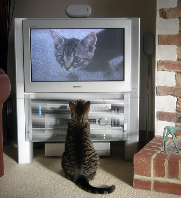 """This wasn't exactly what I meant by """"kitty TV."""" Photo CC-BY cloudzilla"""