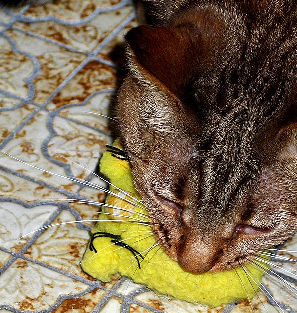 Olivia with her toy. Photo by Marilyn Krieger, CCBC
