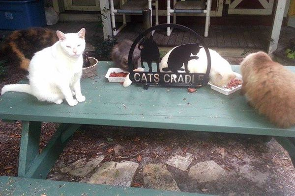 A group of cats enjoys breakfast on the patio.