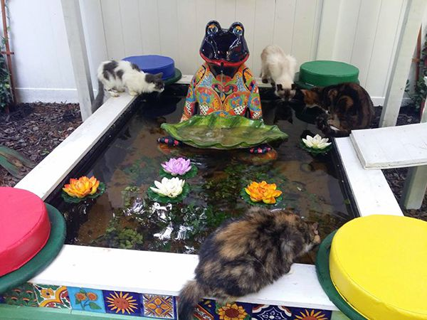 A group of cats enjoys the fish pond in the Tranquility Garden.
