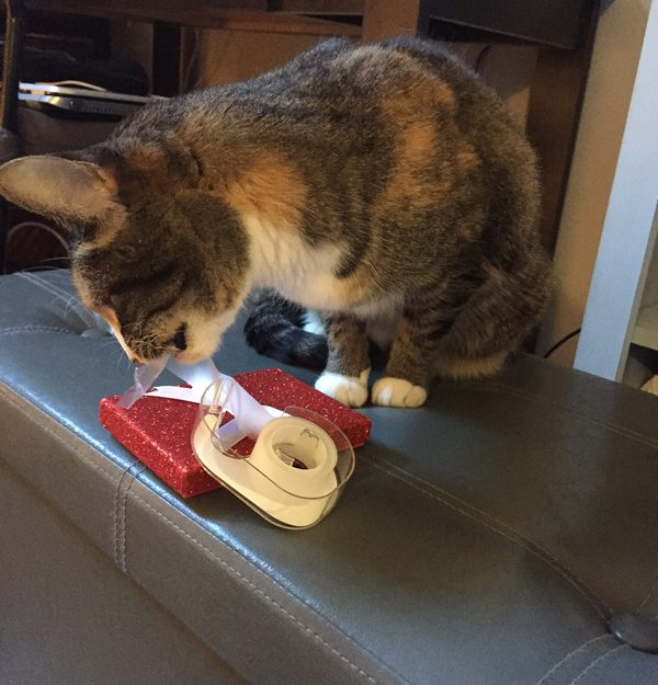 A cat chewing on gift-wrapping tape.