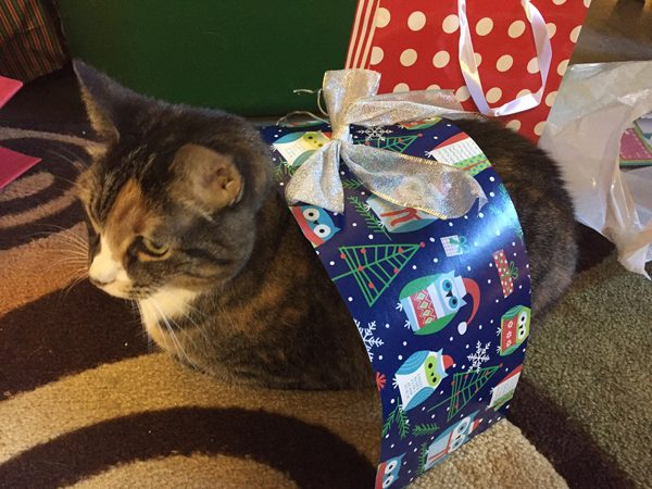 A cat wrapped up in gift wrap and ribbons.