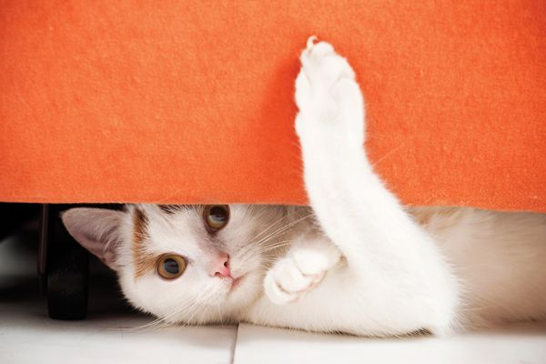 Cat hiding under furniture.See more of my cats: