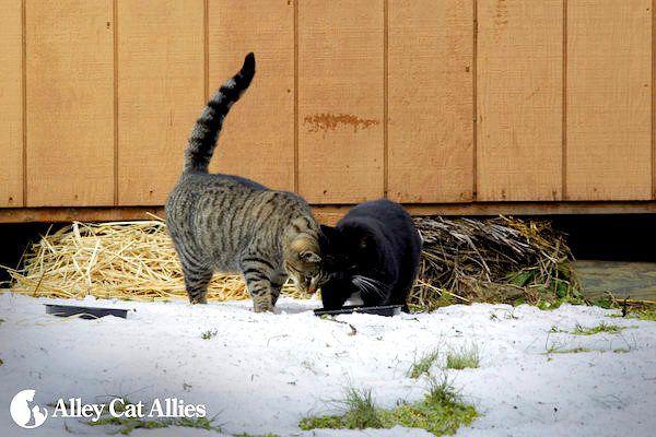 winter-tips-outdoor-cats-04