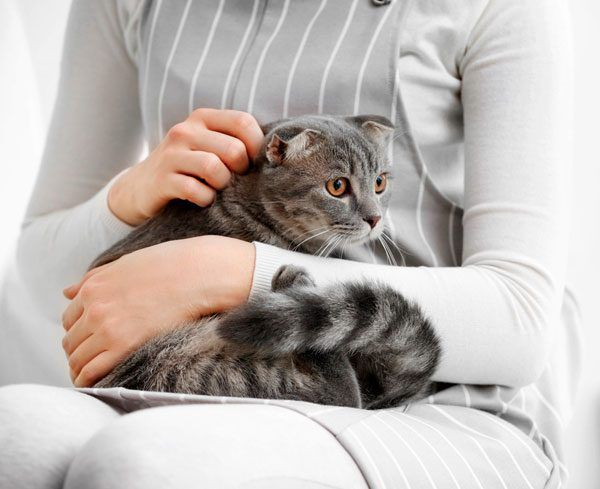 Some cats meow when they want to be picked up or when they want to be put down. Photo by Shutterstock