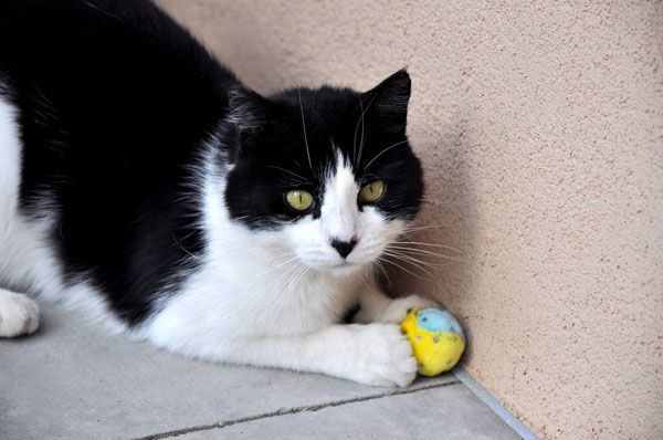 Kitty playing with a ball.