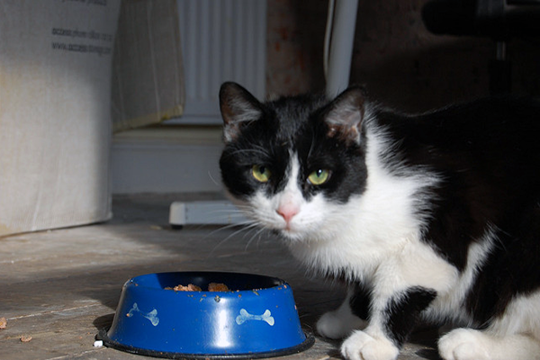 There have been a couple of high-profile pet food recalls lately.