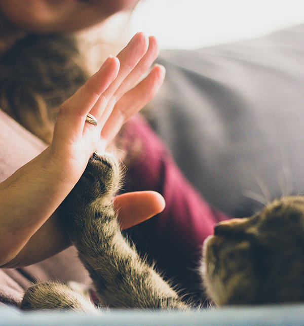 Let's talk: how can pet food manufacturers be held to an appropriately high standard?