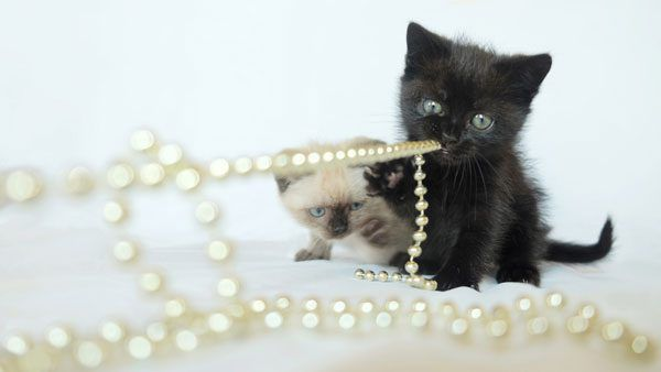 Keep kittens safe. Don't let them play with jewelry.