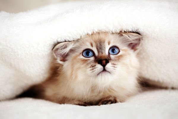 Cats, like all animals, repeat behaviors when they are getting the desired results.