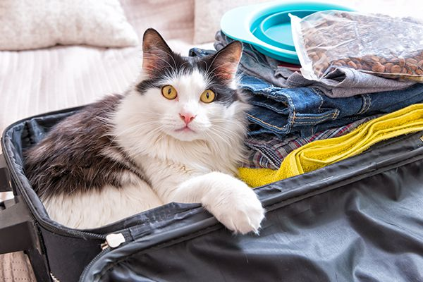 A black and white cat sitting in a suitcase, ready to travel.