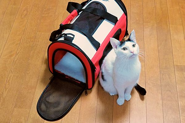 A black and white cat sitting next to a cat carrier.