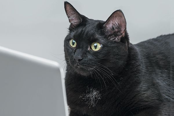 A black cat on a laptop. Photography by Hasloo/Thinkstock.