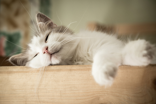 A gray cat asleep with his whiskers out.