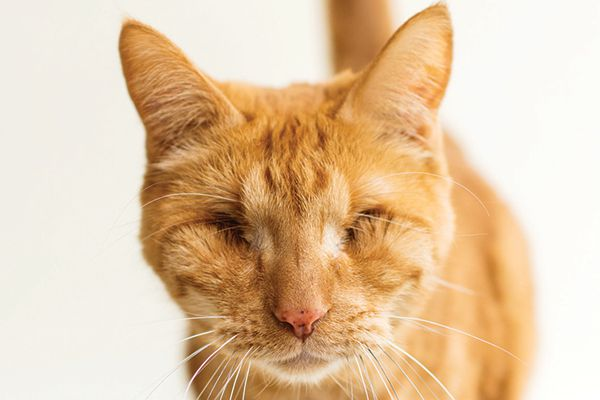 Blind kitties are just one of the many special-needs cats out there.