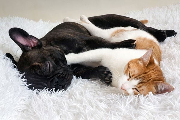 A cat and a dog hugging each other but hating it.