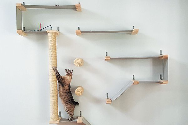 A cat climbing on a wall with multiple scratching areas.