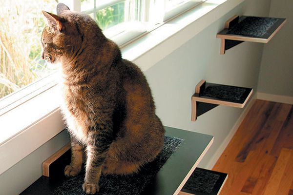 A cat on cat shelves looking out of a window.
