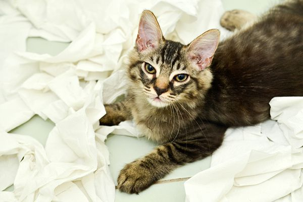 A cat sitting in a pile of tissues.