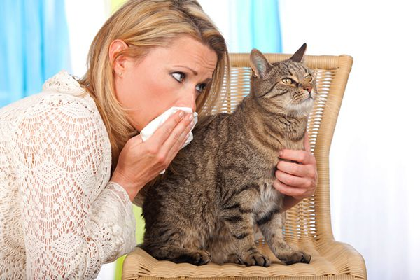 A woman blowing her nose near an agitated cat.