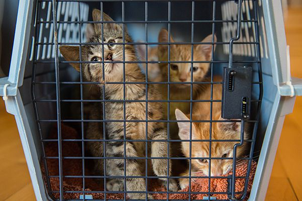Kittens in a carrier.