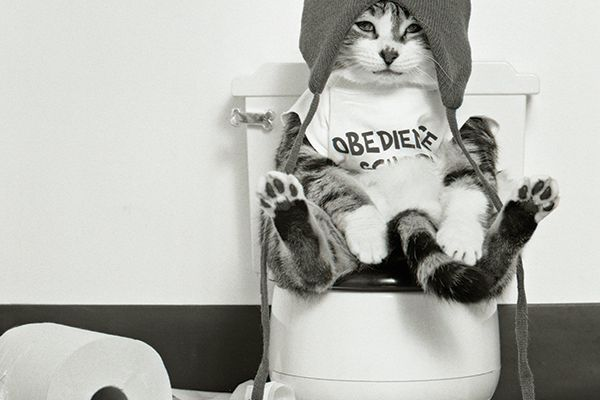 A cat on the toilet with toilet paper.