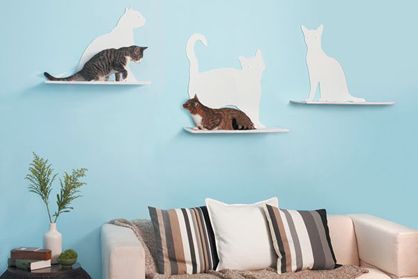 Cats on cat shelves above a couch.
