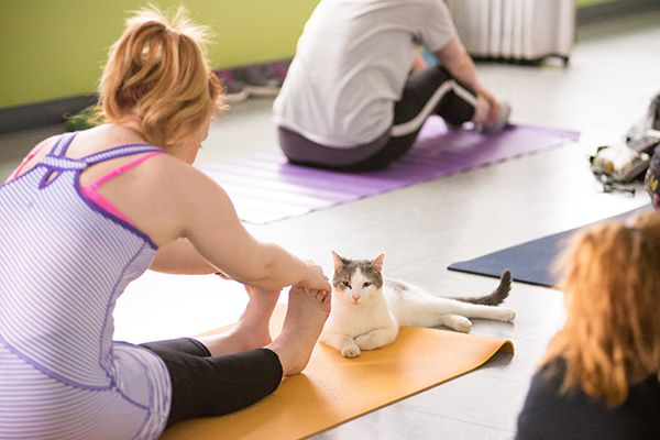 Photography courtesy Yoga With Cats.