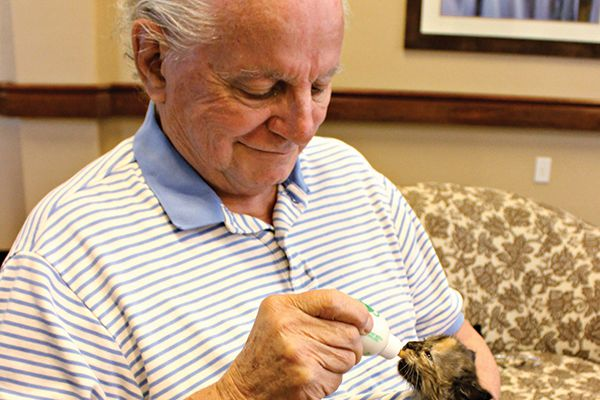 Nursing homes with cats.