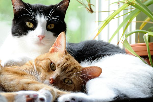Two cats lying down and relaxing together.