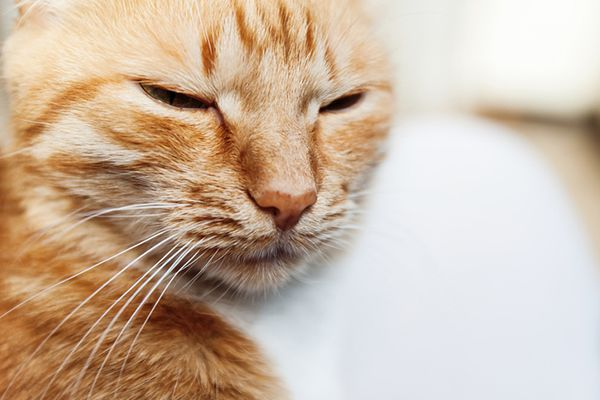 A happy cat with his eyes closed or blinking.