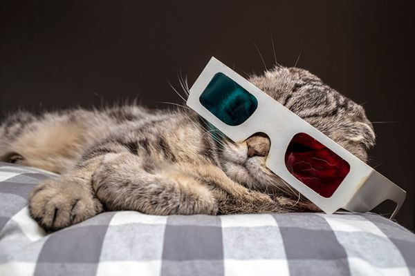A cat in the dark with 3D glasses on.
