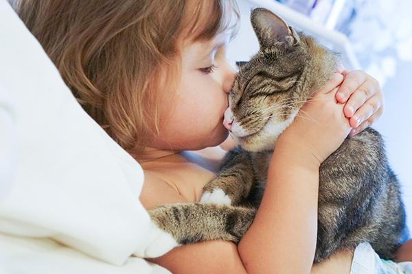 A cat headbutting a little girl.