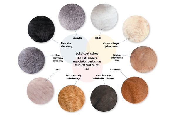 Cat colors chart. Photography ©Thinkstock Images.