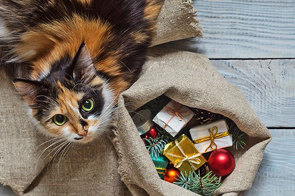 A calico cat with a sack of Christmas / holiday gifts.