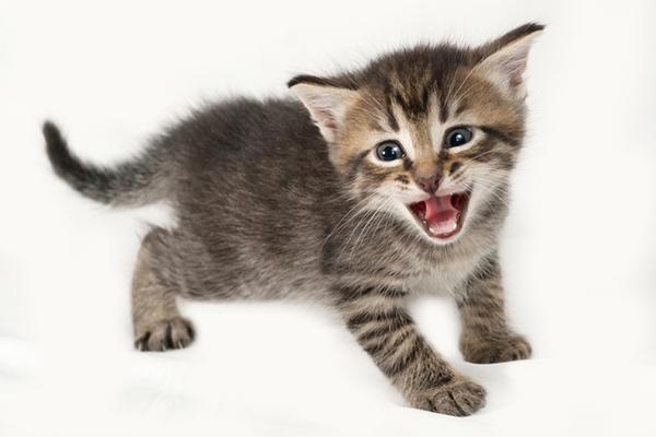 A kitten meowing.