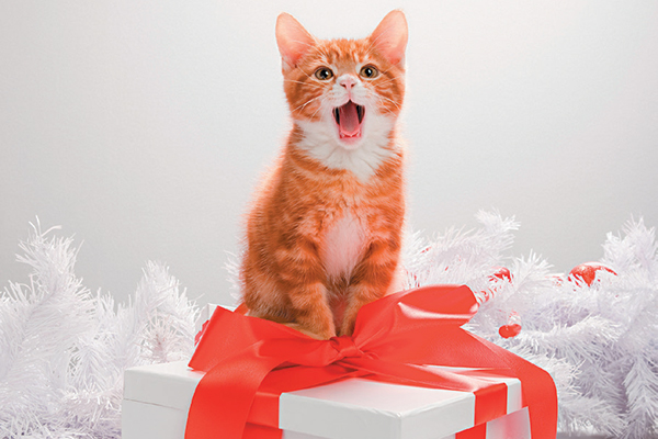 A cat with a wrapped holiday gift.