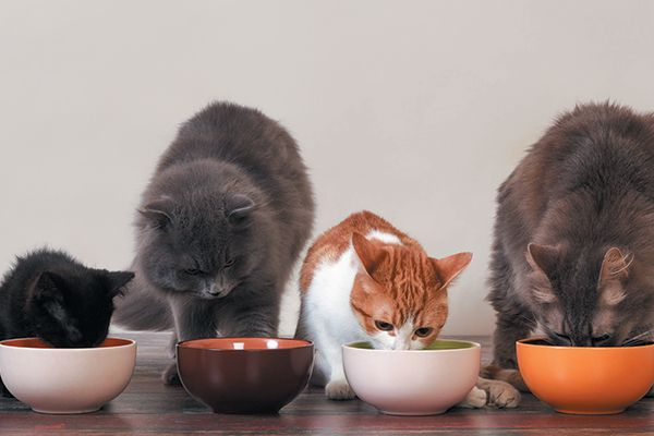 A group or a bunch of cats eating out of food bowls.