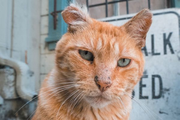 Adam has been working with feral cat Stubbs for the last five years.