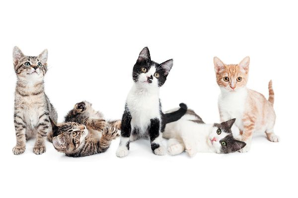 5 kittens or a group of cats on a white background.